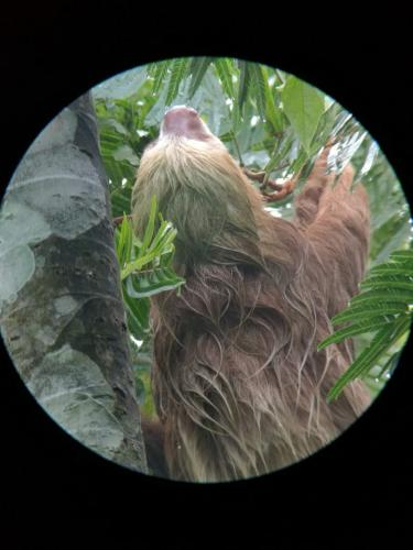 Sloth Watching Trail