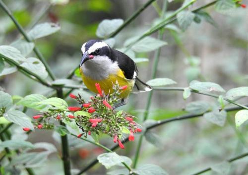Arenal Bird Watching Tour