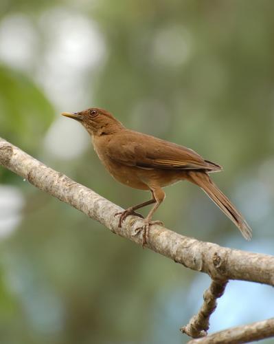 Bird Watching La Fortuna