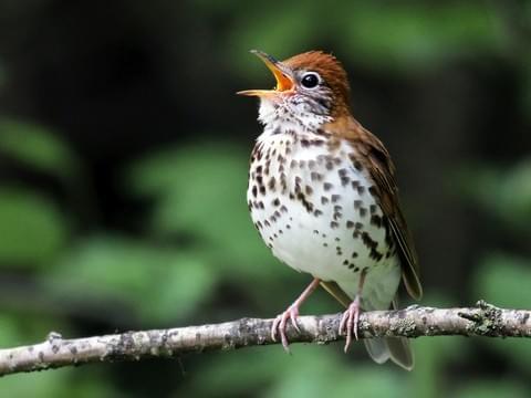 Birding Arenal