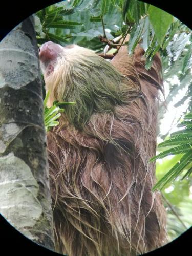 Sloth Tour Arenal